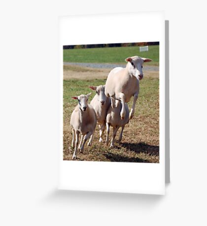 Leaping Sheep Greeting Card