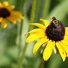 Happy Bee - Crop by Vincent Vartorella