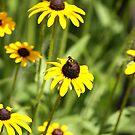 Happy Bee by Vincent Vartorella