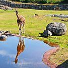 giraff by Rudschinat