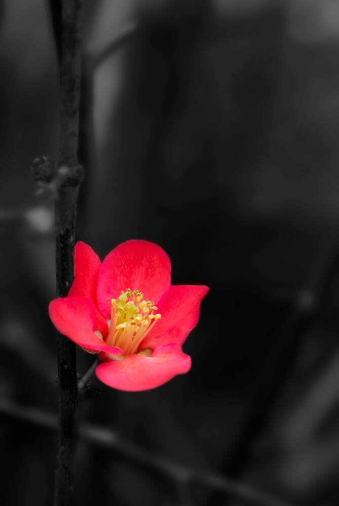 Blossom by natureshues