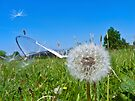 Dandelion clock and wind blown seed by GrahamCSmith