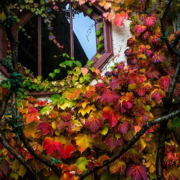 A Window in Fall Colors by DaleCody