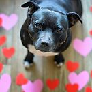 Staffy Love by Michelle McMahon