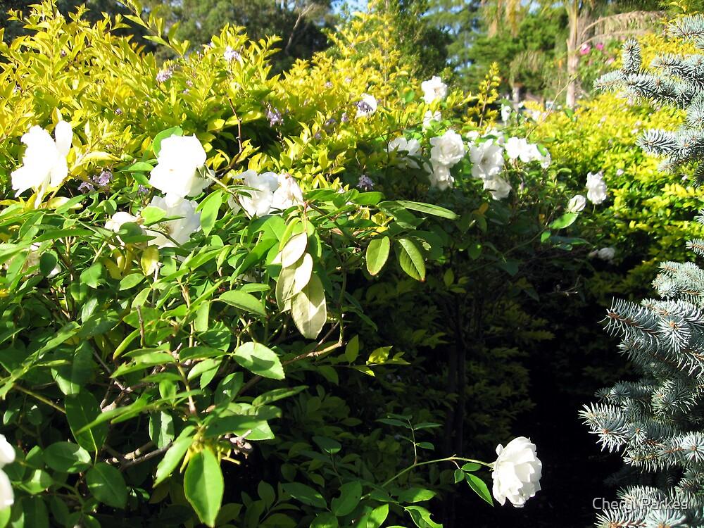 Rose Garden by Cheryl Parkes