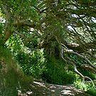 Opua......Bay of Islands -  New Zealand........!! by Roy  Massicks