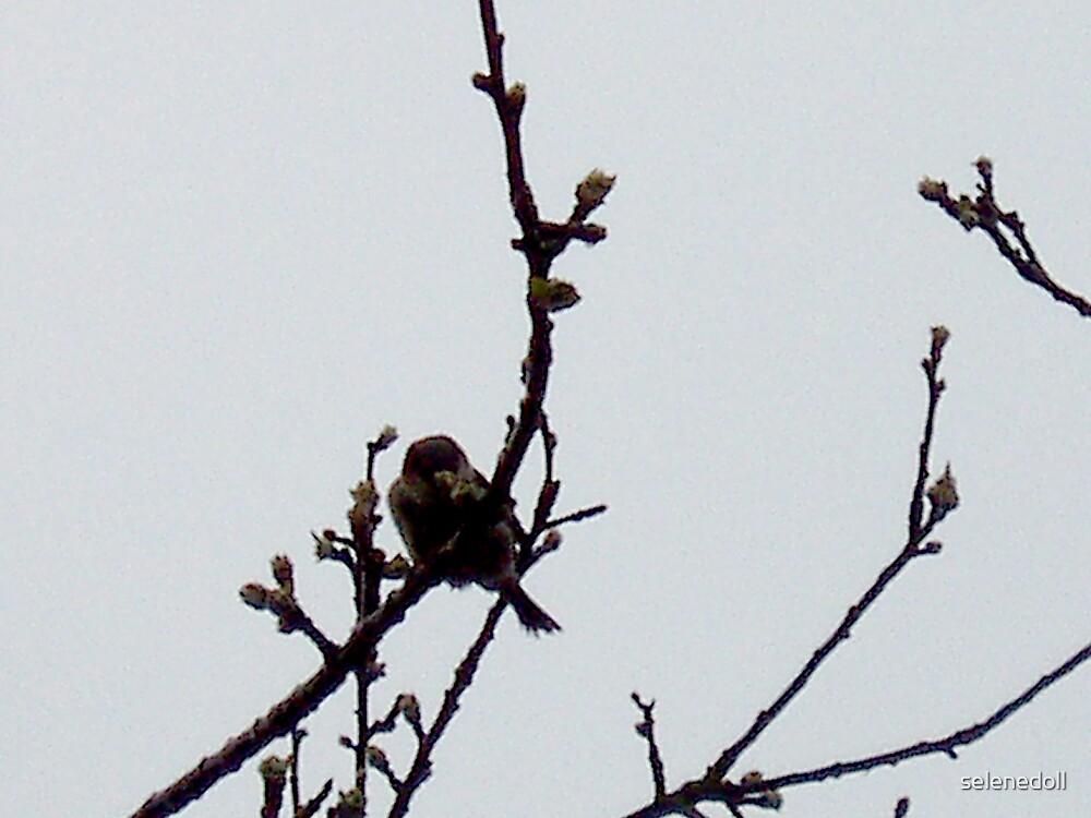 shadow bird by selenedoll