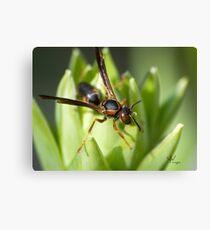 Wasp Macro Canvas Print