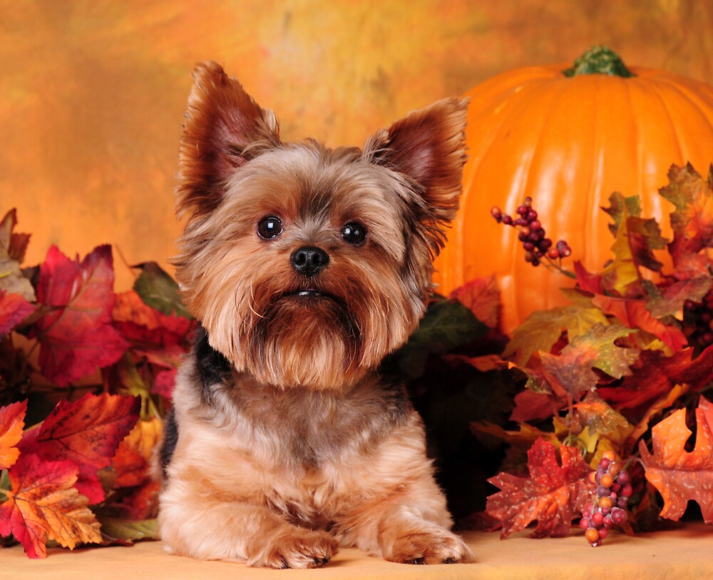 Pumpkin patch Pup by Lover1969
