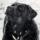 SNOWY DAY by cdudak