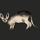 dunkle Sphynx Katze von undergrass