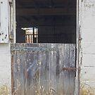 Memories of Livestock by Steven Godfrey