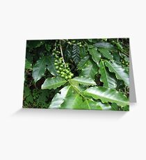Cofee Beans 2 Greeting Card