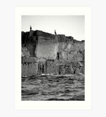 Farne Island Cormorants Art Print