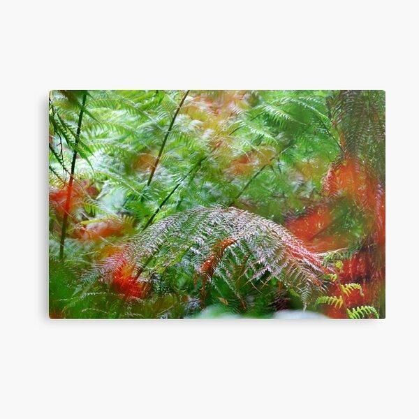 Otways Ferns Metal Print