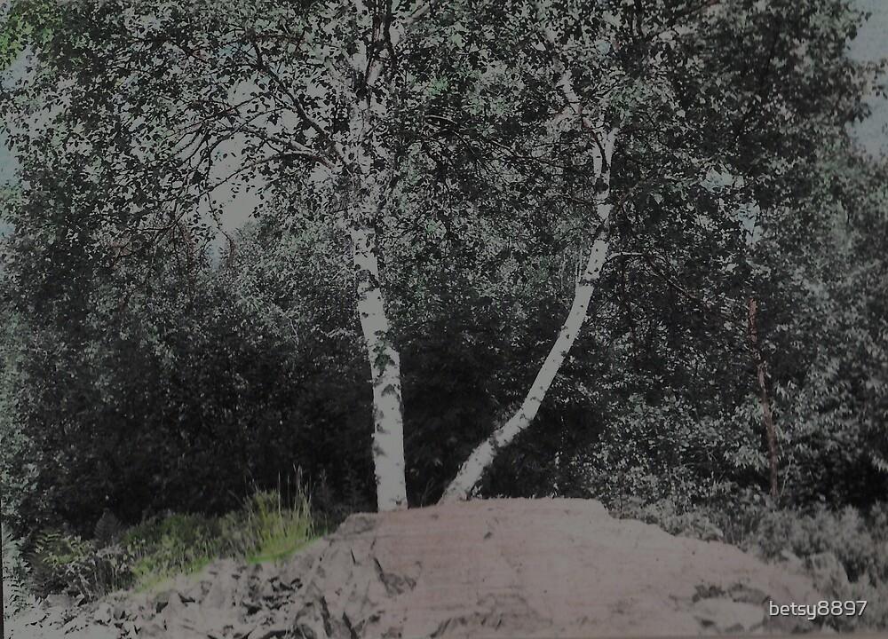 Birch Tree by betsy8897