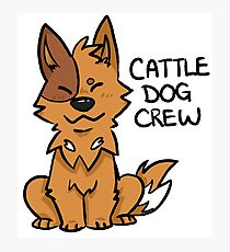 Red Cattle Dog Crew Photographic Print