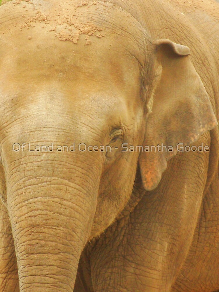 Gentle Giant  by Of Land & Ocean - Samantha Goode