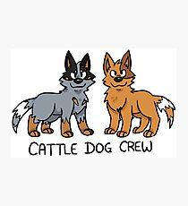Cattle Dog Crew Photographic Print