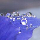 Beads by Shaina Haynes