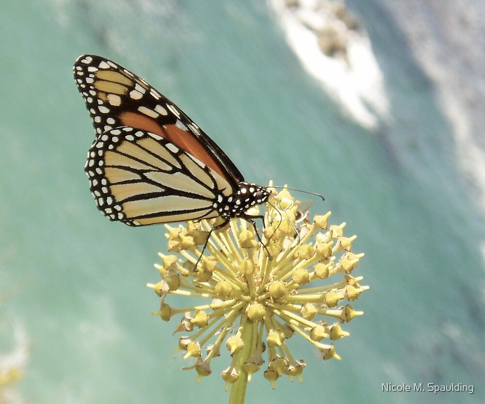 butterfly effect by Nicole M. Spaulding
