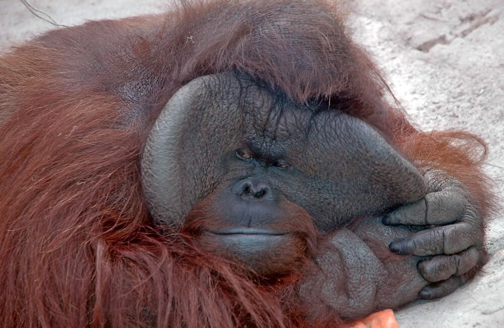 Orangutan pulling a face by memphisto