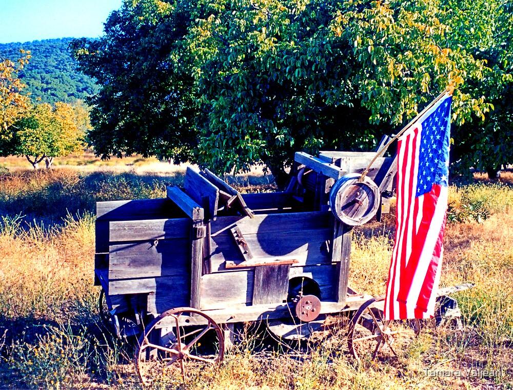 Cart With Flag by Tamara Valjean
