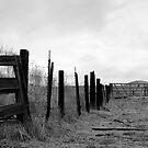 bull fence by Nicole M. Spaulding