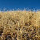 golden hill by Nicole M. Spaulding