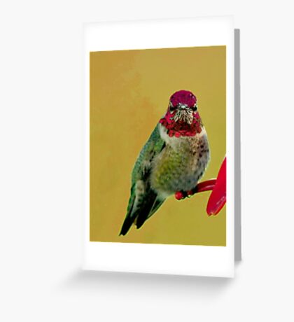 "ANNA""S HUMMINGBIRD Greeting Card"