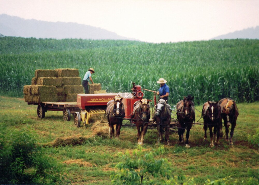 Amish Farmers and Plow Horses Bringing in the Hay by clizzio