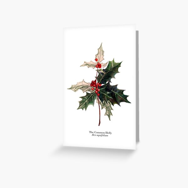 green grows the holly Greeting Card