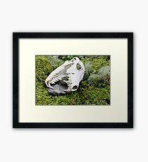 Not everyone survives the winter. Framed Print