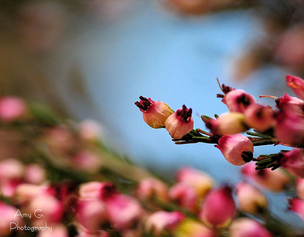 Tiny Blooms and Blue Sky by AmyG