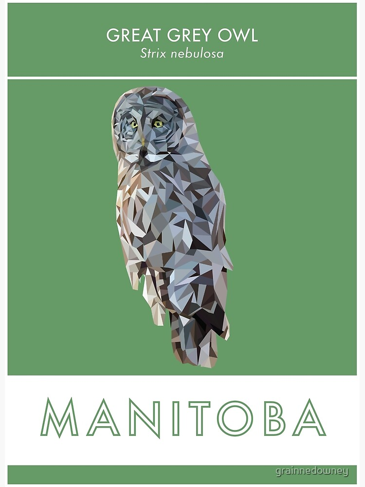 Manitoba - Great Grey Owl by grainnedowney