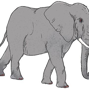 Elephant by Brydenophyte