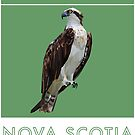 Nova Scotia - Osprey by grainnedowney