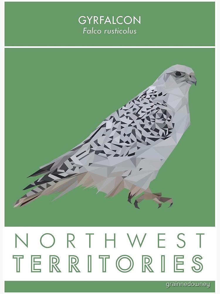 Northwest Territories - Gyrfalcon by grainnedowney