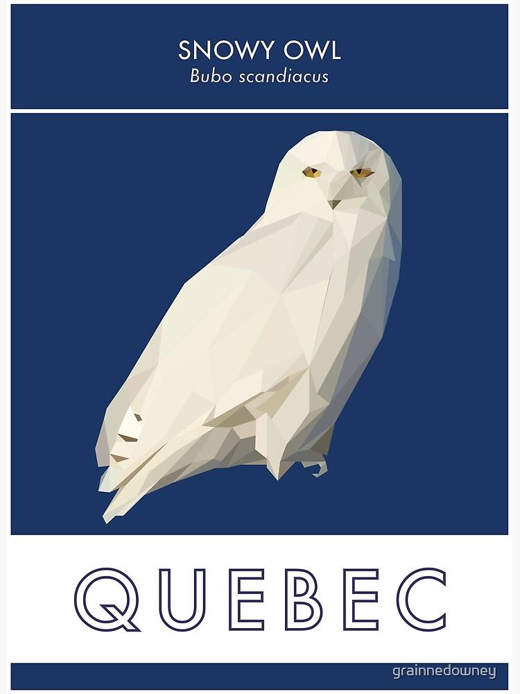 Quebec - Snowy Owl by grainnedowney