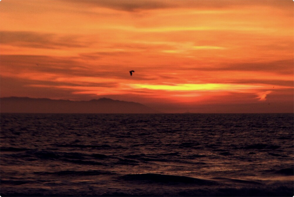 Catalina Island in the Distance.. by Melissa  Carroll