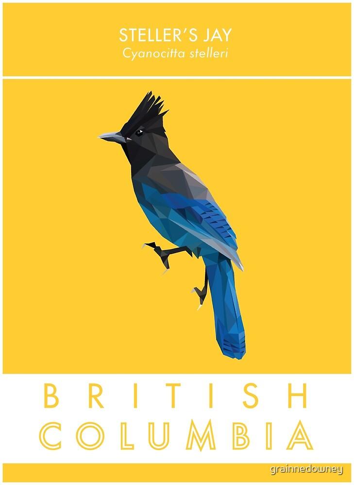 British Columbia - Stellar's Jay by grainnedowney
