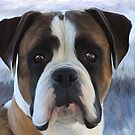 Boxer.. by Cazzie Cathcart