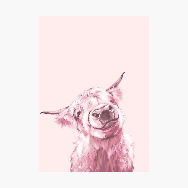 Highland Cow in Pink Photographic Print