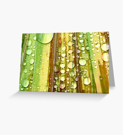 Shower Curtain Greeting Card