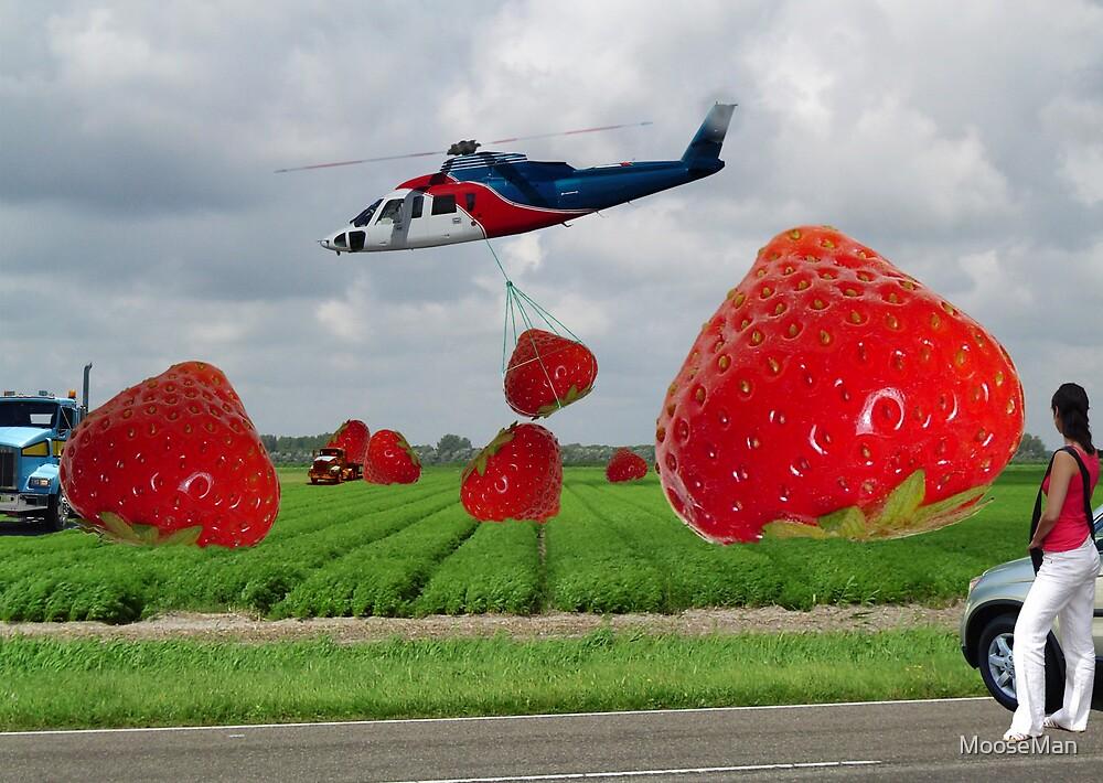 Secret strawberry fields by MooseMan