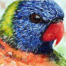 Rainbow Lorikeet by Paul Gilbert