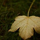 the end of autumn by Gregor Pawlak