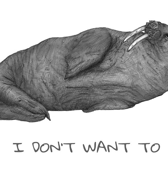 I Don't Want To   Lazy Walrus by ECMazur
