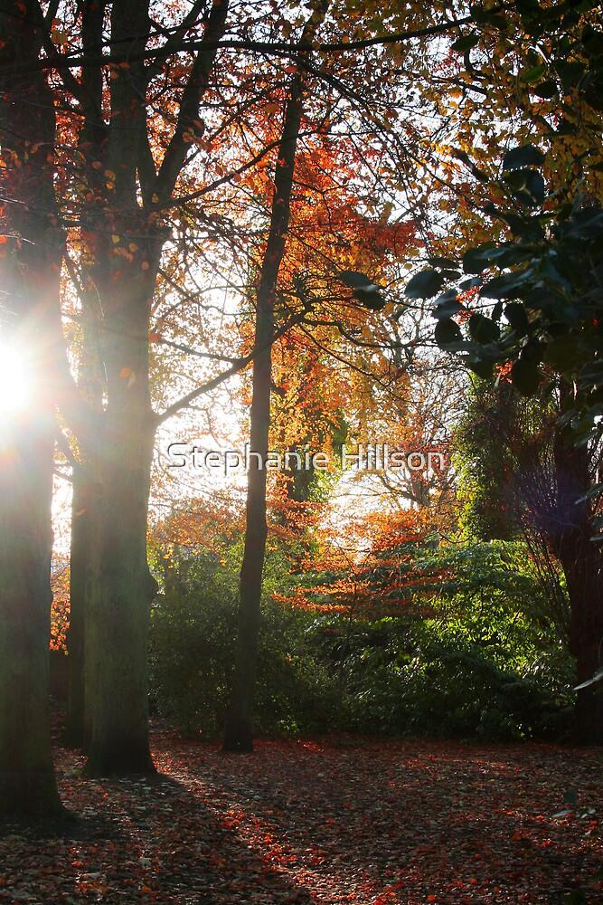 See Through The Trees by Stephanie Hillson