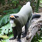 De Braz Monkey by Steve Bullock